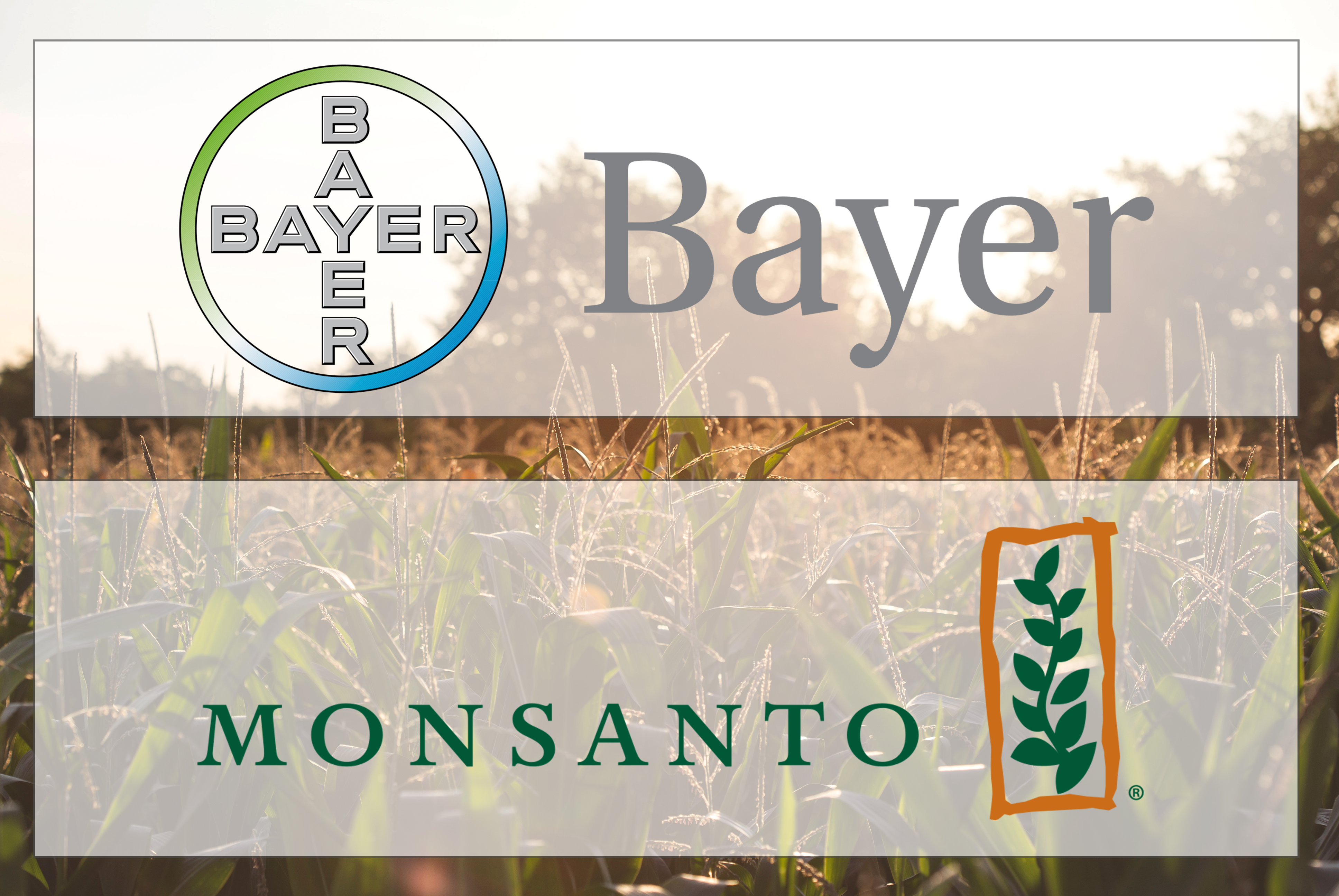 NFU Condemns Bayer/Monsanto Deal, Asks for Critical Review of Consolidation in Ag